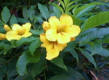yellow bush flower